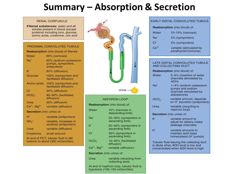 Summary – Absorption & Secretion