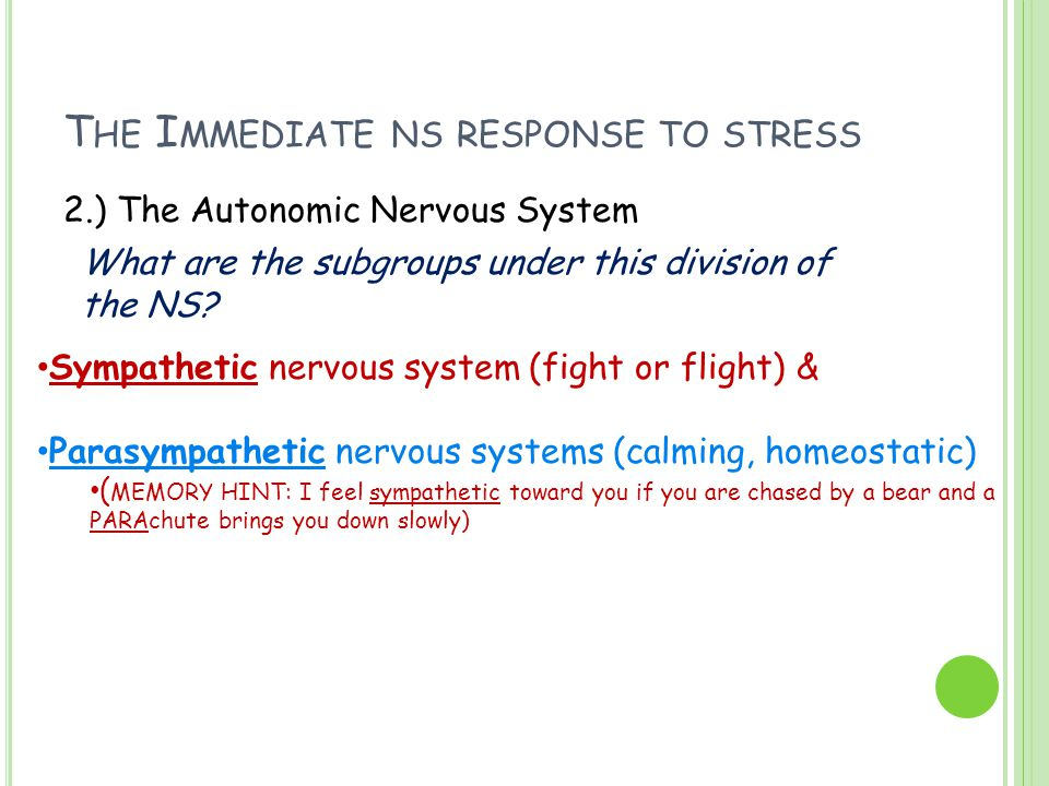 T HE I MMEDIATE NS RESPONSE TO STRESS 2.) The Autonomic Nervous System What are the subgroups under this division of the NS? Sympathetic nervous syste