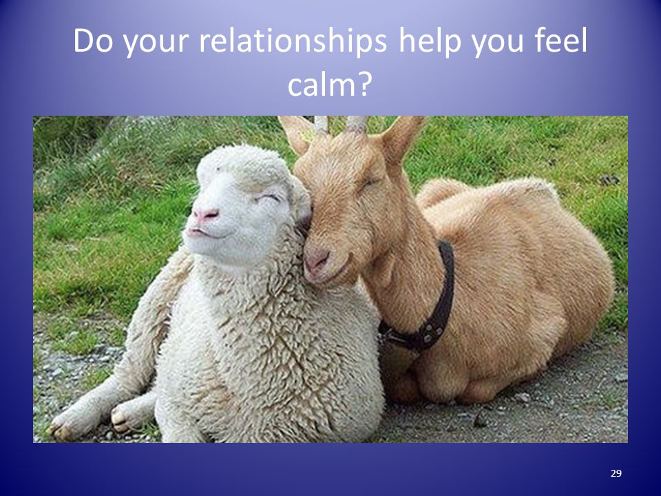 Do your relationships help you feel calm 29