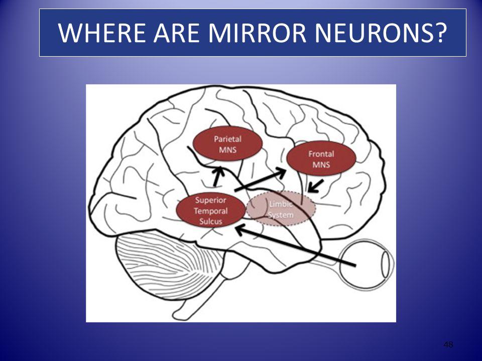 WHERE ARE MIRROR NEURONS 48