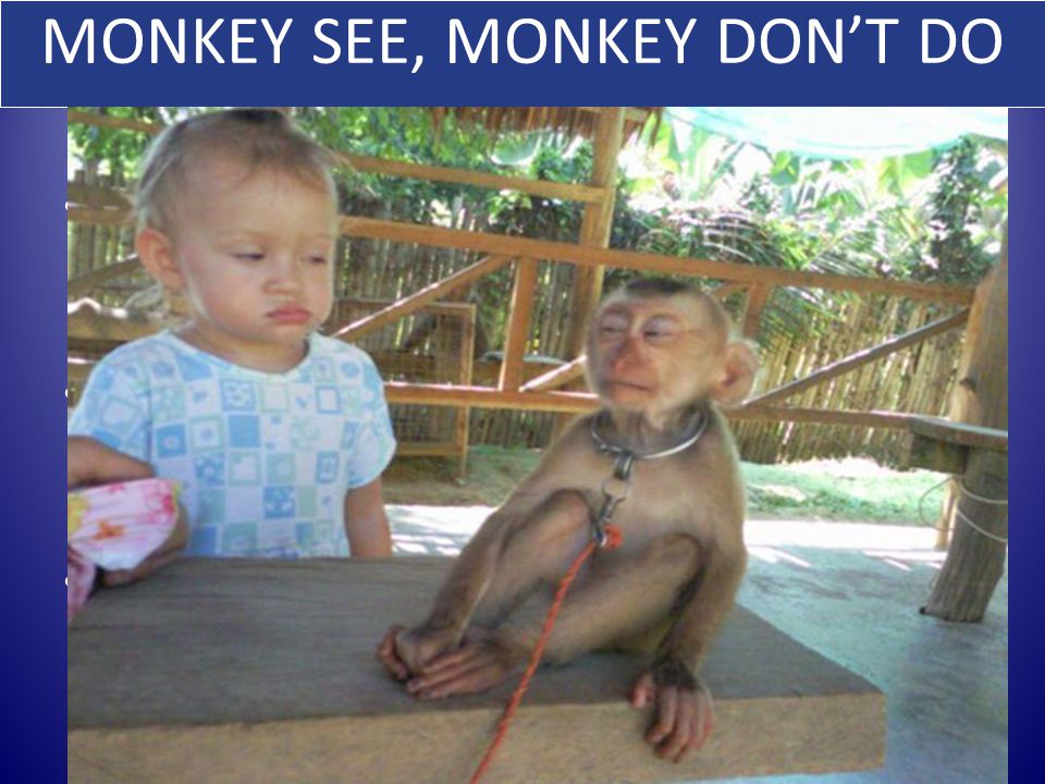 MONKEY SEE, MONKEY DON'T DO SUPER MIRROR NEURONS KEEP US FROM OUTWARDLY MIMACKING EVERYONE'S ACTIONS FUNCTIONAL/INHIBITORY MIRROR NEURONS ON TOP OF THE CLASSICAL MIRROR NEURONS FIRE WHEN OBSERVING ANOTHER PERSON'S ACTIONS SO YOUR BODY DOESN'T SIMPLY IMITATE THE ACTIVITY 50