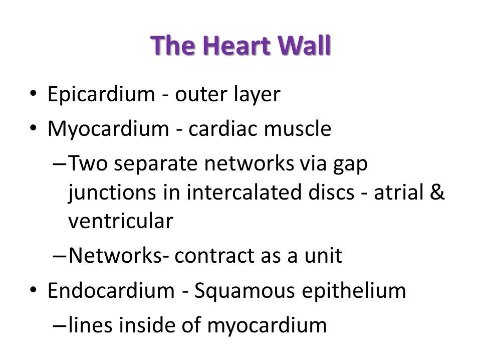 The Heart Wall