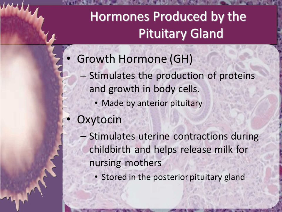 Hormones Produced by the Pituitary Gland Growth Hormone (GH) – Stimulates the production of proteins and growth in body cells. Made by anterior pituit