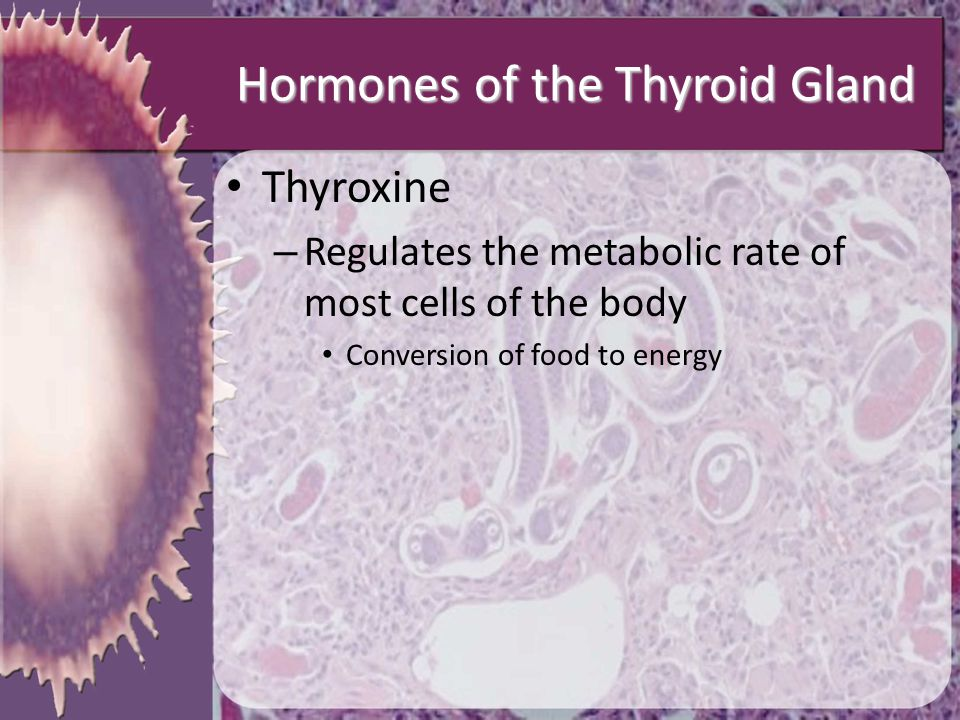 Hormones of the Thyroid Gland Thyroxine – Regulates the metabolic rate of most cells of the body Conversion of food to energy