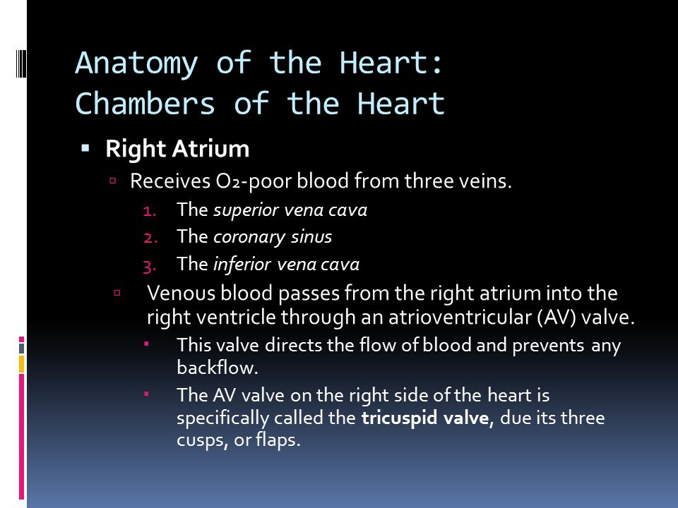 Anatomy of the Heart: Chambers of the Heart  Right Atrium  Receives O 2 -poor blood from three veins. 1.The superior vena cava 2.The coronary sinus