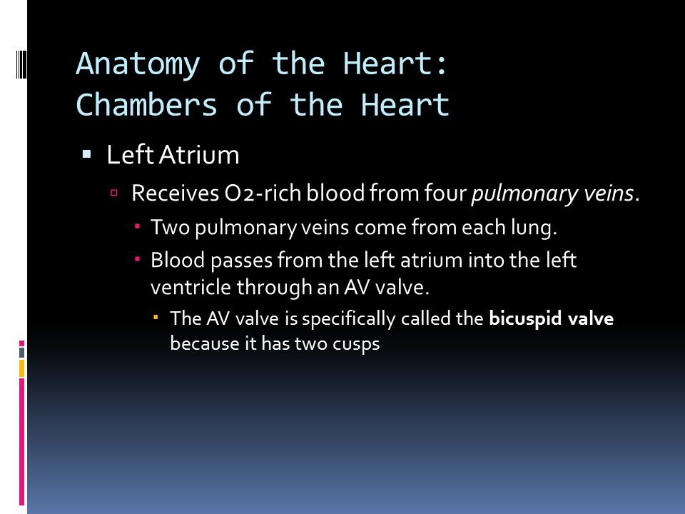 Anatomy of the Heart: Chambers of the Heart  Left Atrium  Receives O2-rich blood from four pulmonary veins.  Two pulmonary veins come from each lun