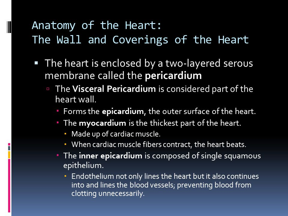Anatomy of the Heart: The Wall and Coverings of the Heart  The heart is enclosed by a two-layered serous membrane called the pericardium  The Viscer