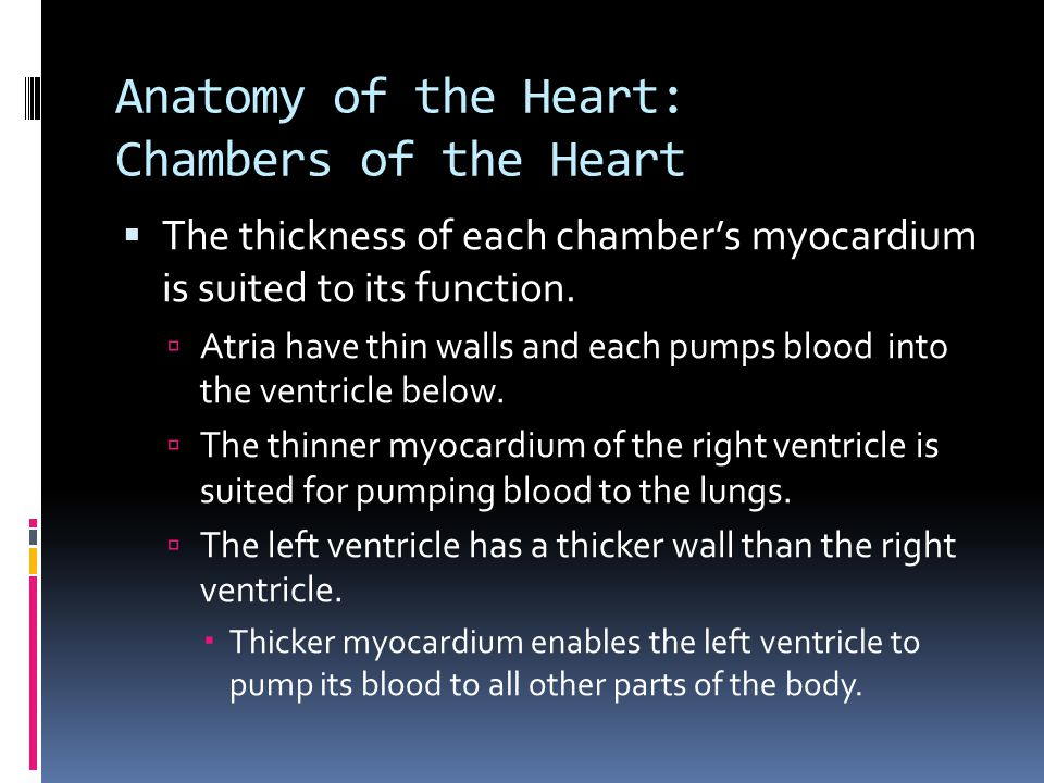 Anatomy of the Heart: Chambers of the Heart  The thickness of each chamber's myocardium is suited to its function.  Atria have thin walls and each p