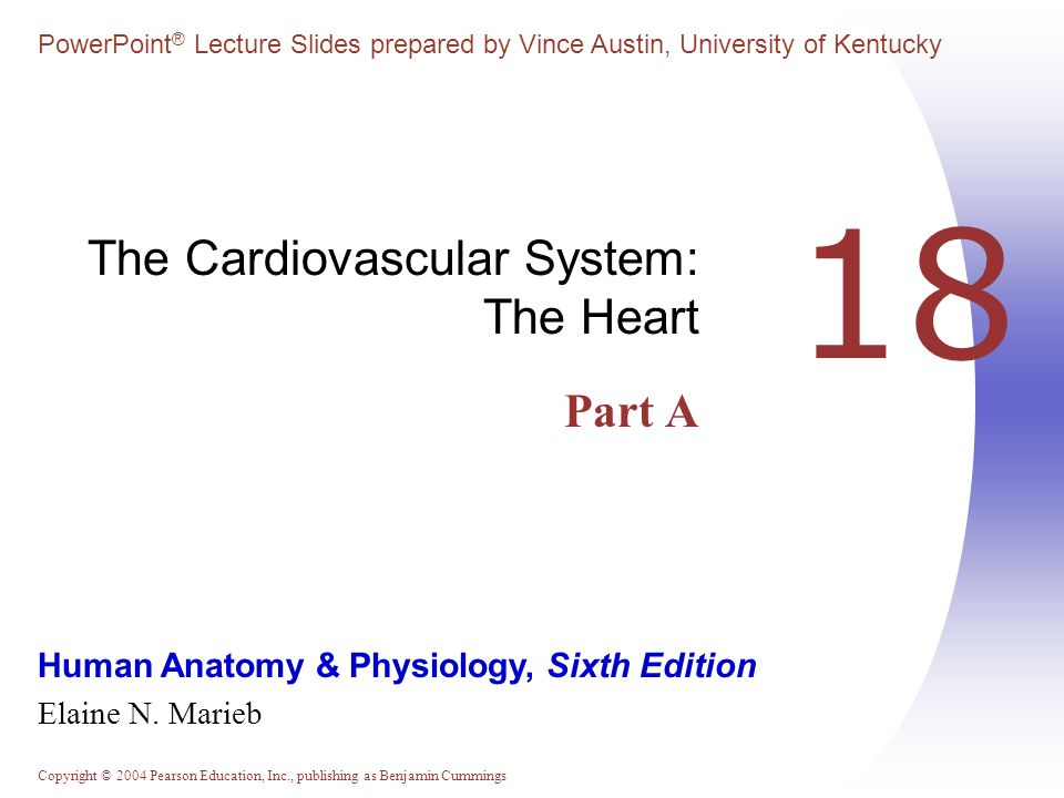 Copyright © 2004 Pearson Education, Inc., publishing as Benjamin Cummings Heart Anatomy  Approximately the size of your fist  Location  Superior surface of diaphragm  Left of the midline  Anterior to the vertebral column, posterior to the sternum