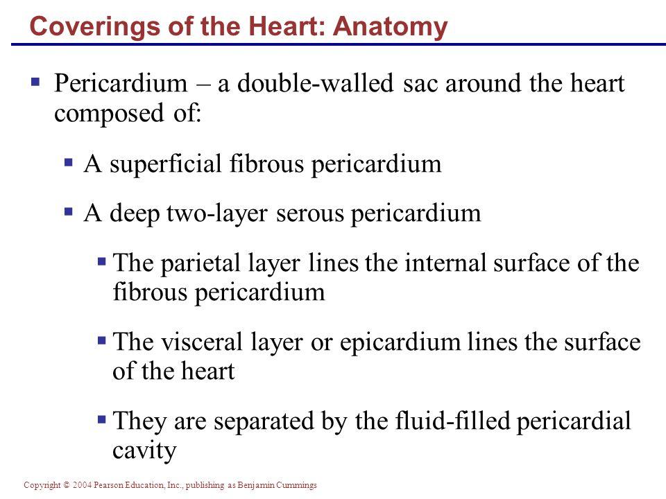 Copyright © 2004 Pearson Education, Inc., publishing as Benjamin Cummings Heart Valves Figure 18.8c, d