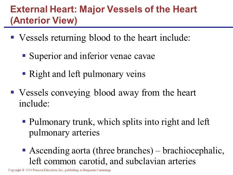 Copyright © 2004 Pearson Education, Inc., publishing as Benjamin Cummings Microscopic Anatomy of Heart Muscle Figure 18.11