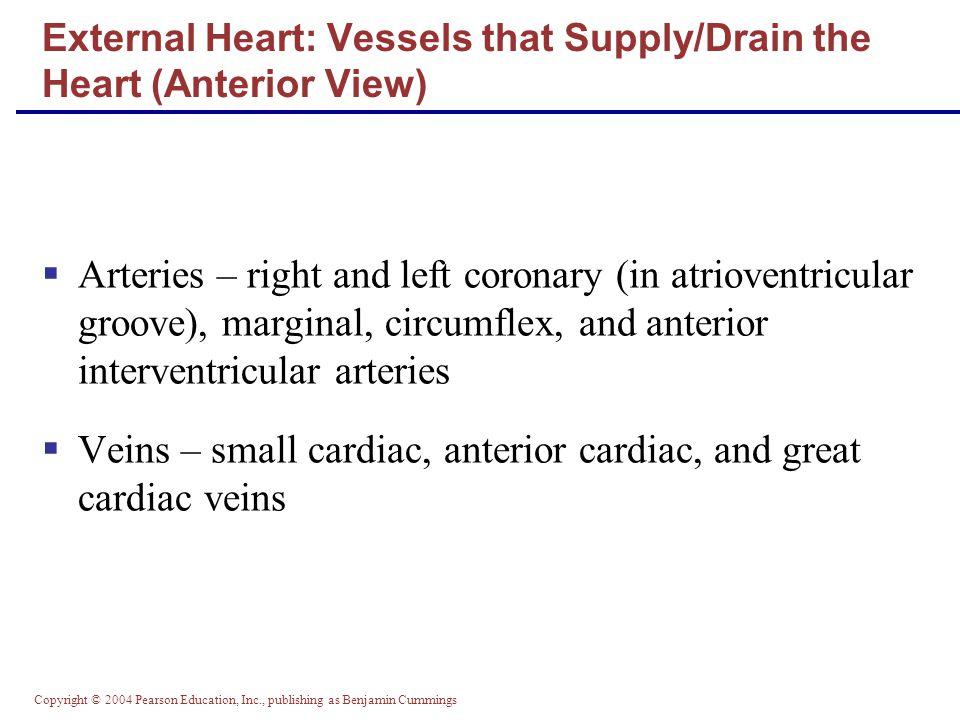 Copyright © 2004 Pearson Education, Inc., publishing as Benjamin Cummings External Heart: Anterior View Figure 18.4b