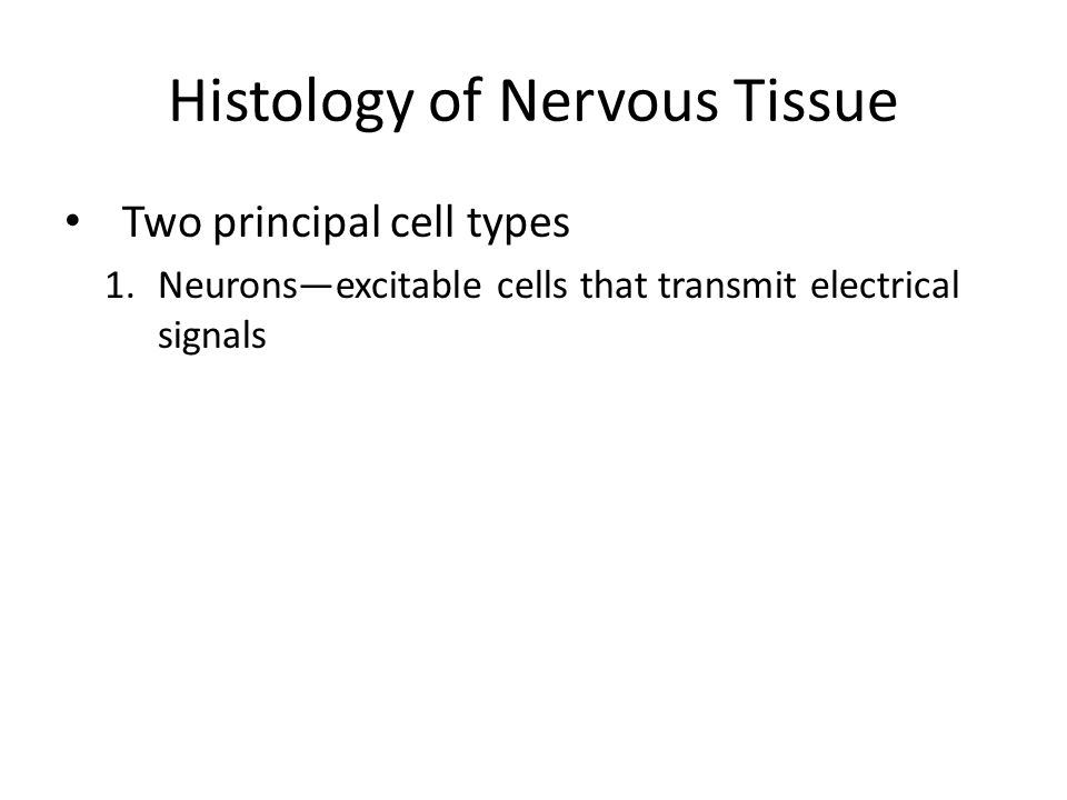 Histology of Nervous Tissue Two principal cell types 1.Neurons—excitable cells that transmit electrical signals