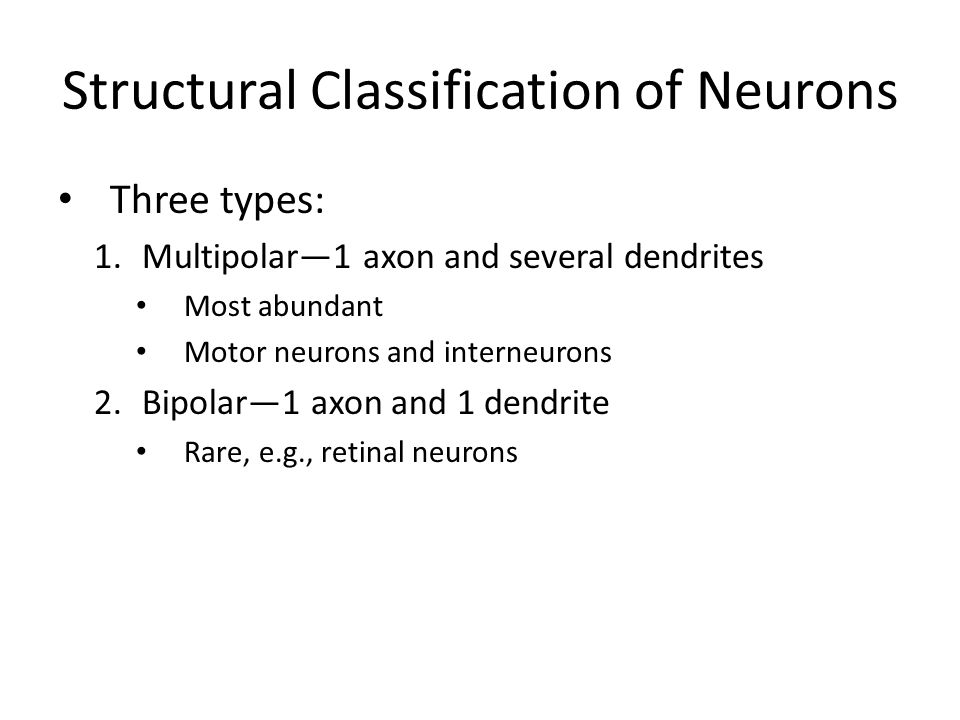 Structural Classification of Neurons Three types: 1.Multipolar—1 axon and several dendrites Most abundant Motor neurons and interneurons 2.Bipolar—1 a