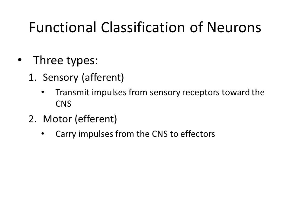 Functional Classification of Neurons Three types: 1.Sensory (afferent) Transmit impulses from sensory receptors toward the CNS 2.Motor (efferent) Carr