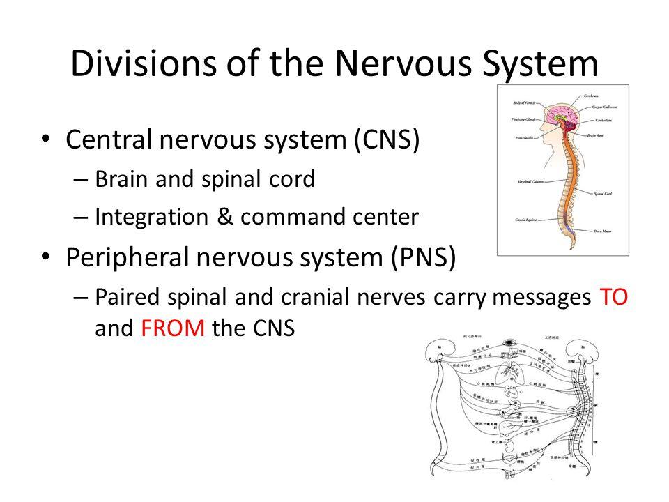 Nerve parts Pay attention to axon, dendrites, body