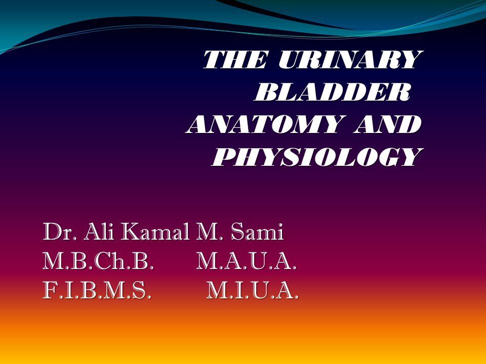 THE URINARY BLADDER ANATOMY AND PHYSIOLOGY Dr. Ali Kamal M.