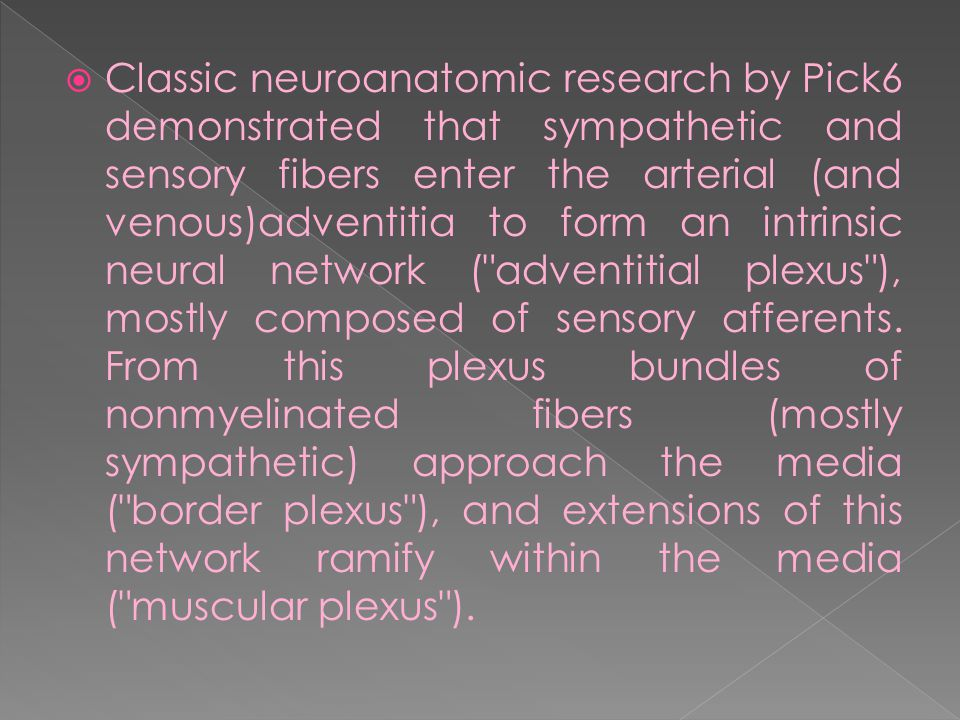  Classic neuroanatomic research by Pick6 demonstrated that sympathetic and sensory fibers enter the arterial (and venous)adventitia to form an intrinsic neural network ( adventitial plexus ), mostly composed of sensory afferents.
