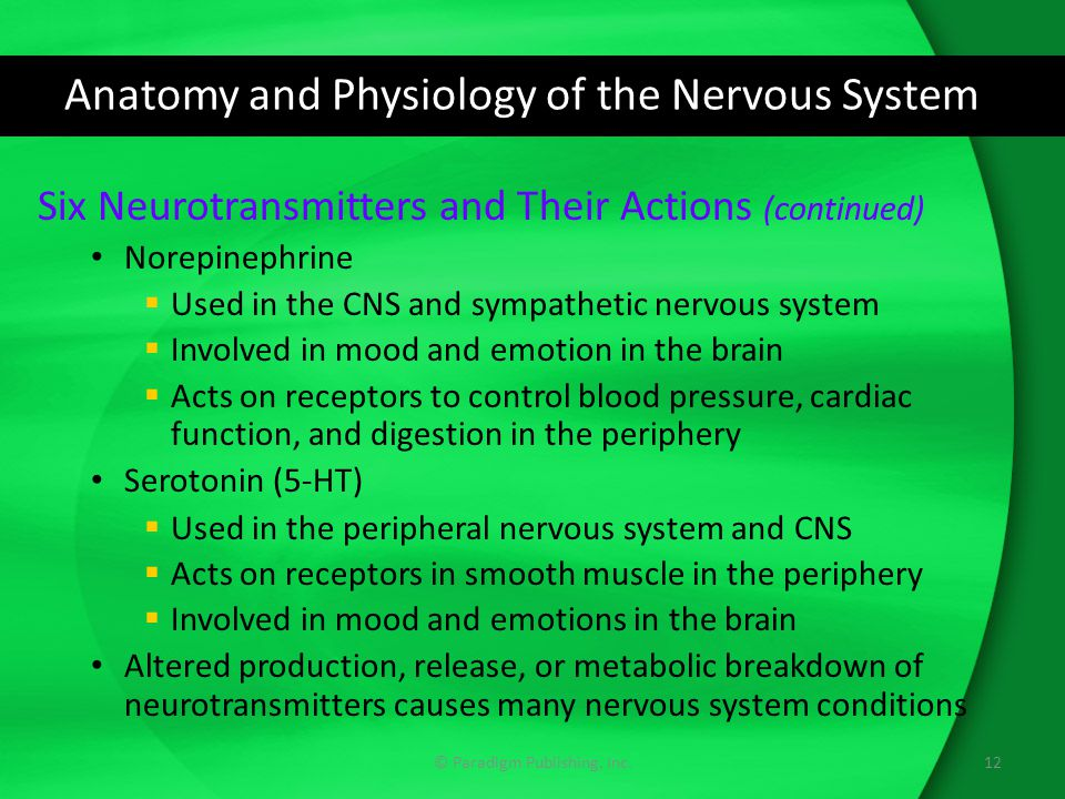Anatomy and Physiology of the Nervous System Six Neurotransmitters and Their Actions (continued) Norepinephrine  Used in the CNS and sympathetic nerv