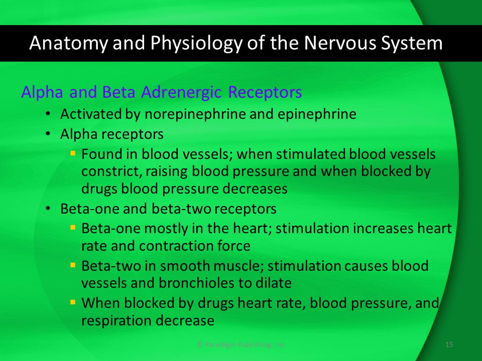 Anatomy and Physiology of the Nervous System Alpha and Beta Adrenergic Receptors Activated by norepinephrine and epinephrine Alpha receptors  Found in blood vessels; when stimulated blood vessels constrict, raising blood pressure and when blocked by drugs blood pressure decreases Beta-one and beta-two receptors  Beta-one mostly in the heart; stimulation increases heart rate and contraction force  Beta-two in smooth muscle; stimulation causes blood vessels and bronchioles to dilate  When blocked by drugs heart rate, blood pressure, and respiration decrease 15© Paradigm Publishing, Inc.