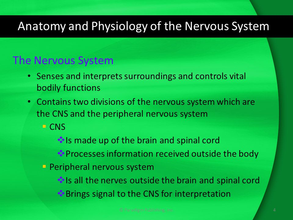 Anatomy and Physiology of the Nervous System The Nervous System Senses and interprets surroundings and controls vital bodily functions Contains two divisions of the nervous system which are the CNS and the peripheral nervous system  CNS  Is made up of the brain and spinal cord  Processes information received outside the body  Peripheral nervous system  Is all the nerves outside the brain and spinal cord  Brings signal to the CNS for interpretation 4© Paradigm Publishing, Inc.