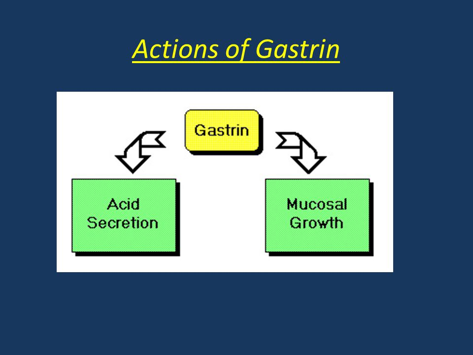 Actions of Gastrin