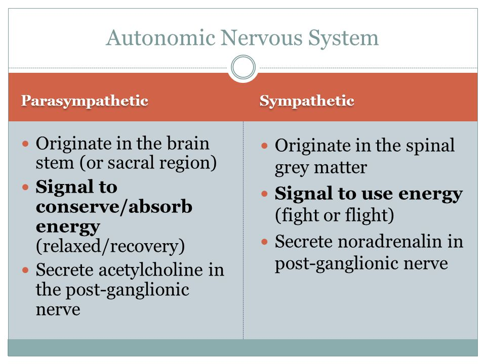 Parasympathetic Sympathetic Originate in the brain stem (or sacral region) Signal to conserve/absorb energy (relaxed/recovery) Secrete acetylcholine in the post-ganglionic nerve Originate in the spinal grey matter Signal to use energy (fight or flight) Secrete noradrenalin in post-ganglionic nerve Autonomic Nervous System