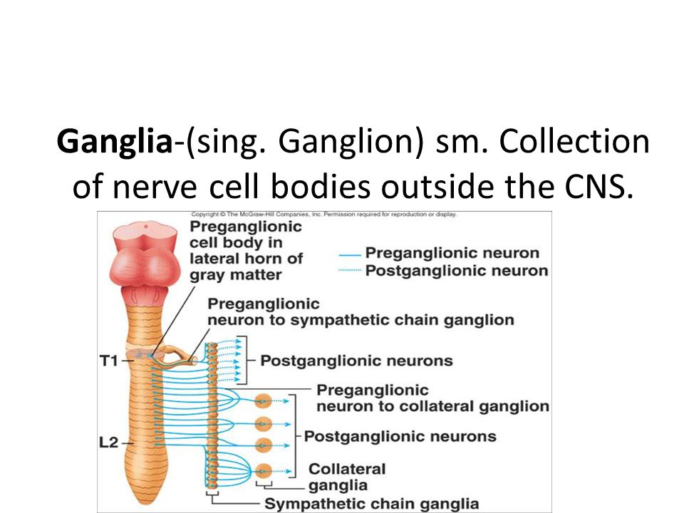 Ganglia-(sing. Ganglion) sm. Collection of nerve cell bodies outside the CNS.