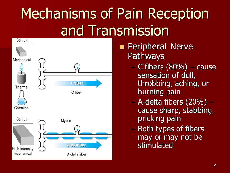 9 Mechanisms of Pain Reception and Transmission Peripheral Nerve Pathways Peripheral Nerve Pathways –C fibers (80%) – cause sensation of dull, throbbing, aching, or burning pain –A-delta fibers (20%) – cause sharp, stabbing, pricking pain –Both types of fibers may or may not be stimulated