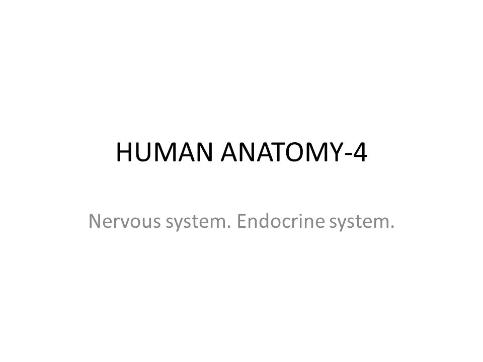 General info There are 2 body systems, which maintain internal coordination of trillions of cells: nervous system and endocrine system.