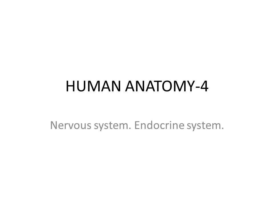 HUMAN ANATOMY-4 Nervous system. Endocrine system.