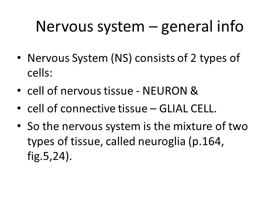 Nervous system – general info Nervous System (NS) consists of 2 types of cells: cell of nervous tissue - NEURON & cell of connective tissue – GLIAL CELL.
