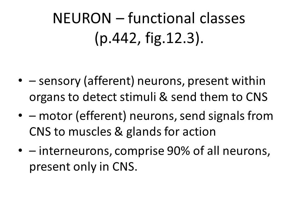 NEURON – functional classes (p.442, fig.12.3).