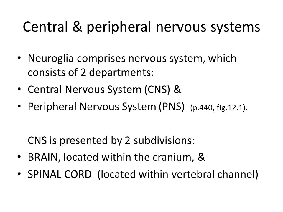 CNS & PNS – functional classification PNS consists of 2 subdivisions: SENSORY subdivision, which receives signals and MOTOR subdivision, which sends outgoing signals.
