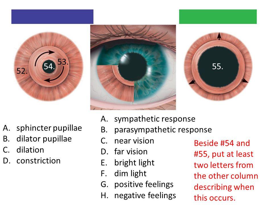 A.sphincter pupillae B.dilator pupillae C.dilation D.constriction A.sympathetic response B.parasympathetic response C.near vision D.far vision E.bright light F.dim light G.positive feelings H.negative feelings 52.