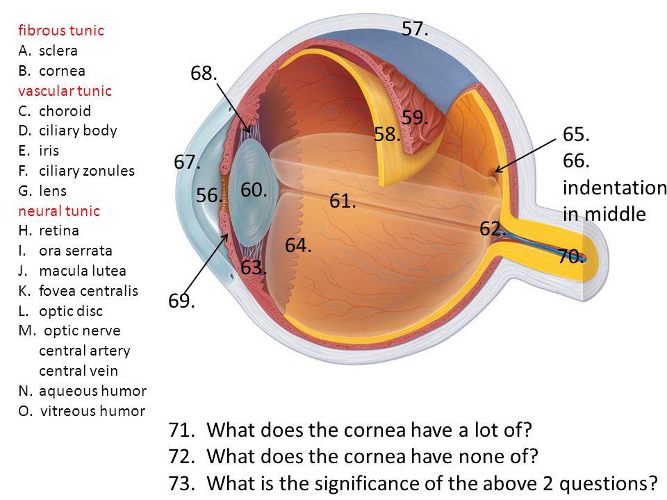 fibrous tunic A.sclera B.cornea vascular tunic C.choroid D.ciliary body E.iris F.ciliary zonules G.lens neural tunic H.retina I.ora serrata J.macula lutea K.fovea centralis L.optic disc M.