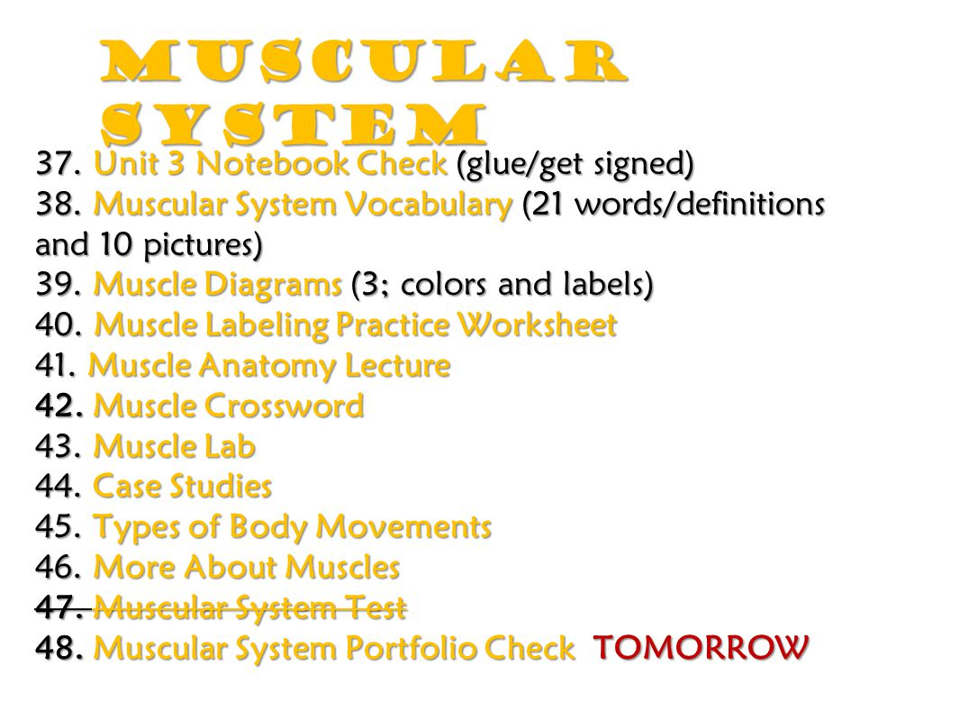 Muscular System 37. Unit 3 Notebook Check (glue/get signed) 38. Muscular System Vocabulary (21 words/definitions and 10 pictures) 39. Muscle Diagrams