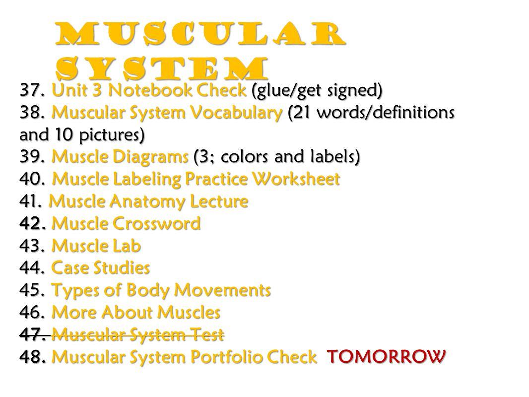 Nervous System 48.Muscular System Portfolio Check GET SIGNED.