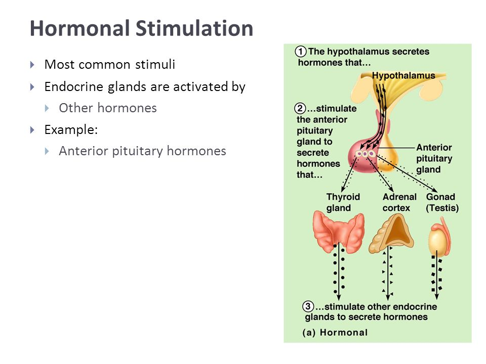 Hormonal Stimulation  Most common stimuli  Endocrine glands are activated by  Other hormones  Example:  Anterior pituitary hormones
