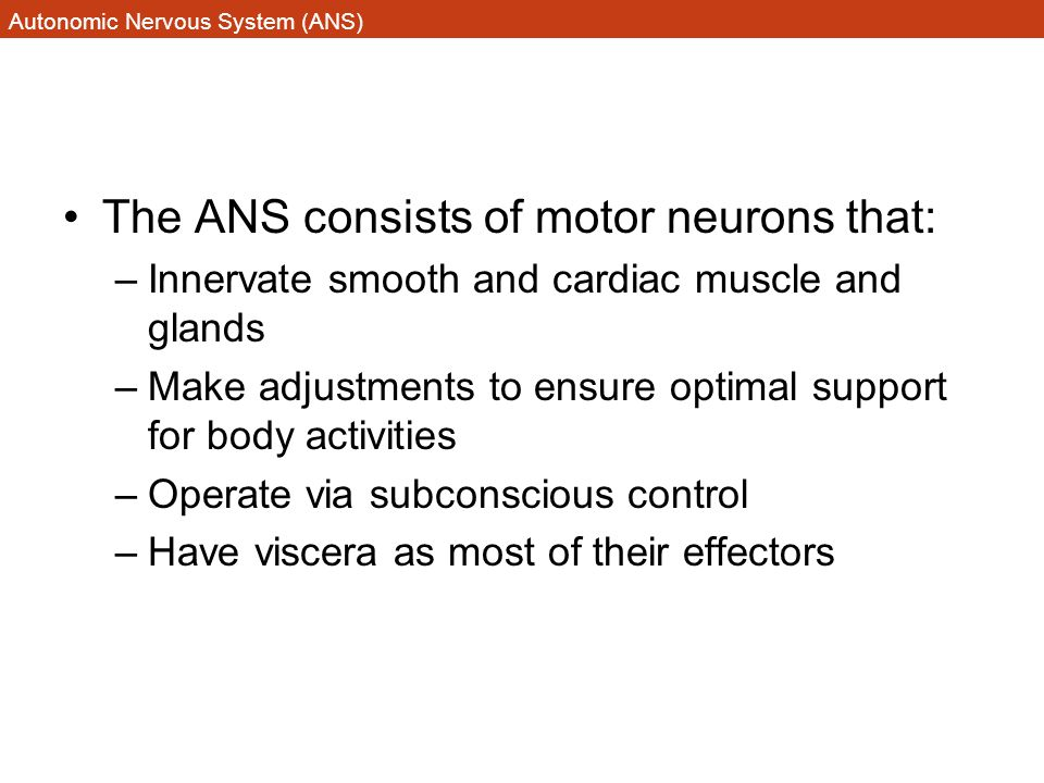 Autonomic Nervous System (ANS) The ANS consists of motor neurons that: –Innervate smooth and cardiac muscle and glands –Make adjustments to ensure opt