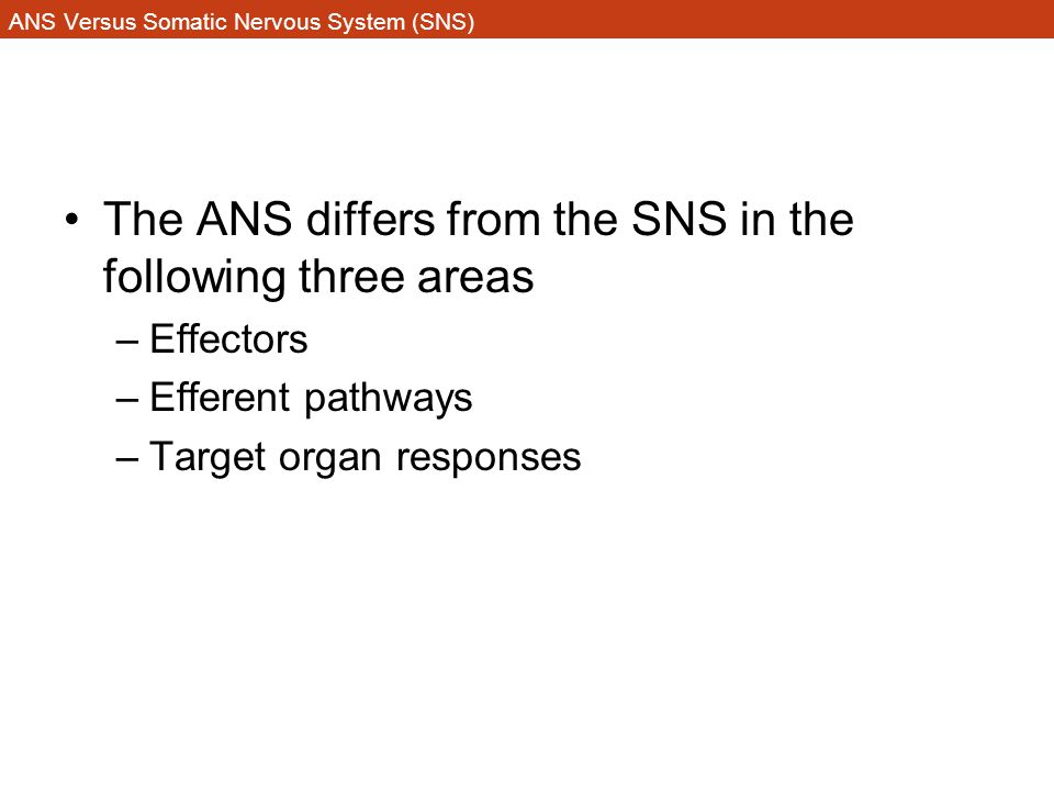 ANS Versus Somatic Nervous System (SNS) The ANS differs from the SNS in the following three areas –Effectors –Efferent pathways –Target organ response