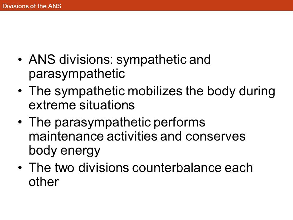 Divisions of the ANS ANS divisions: sympathetic and parasympathetic The sympathetic mobilizes the body during extreme situations The parasympathetic p