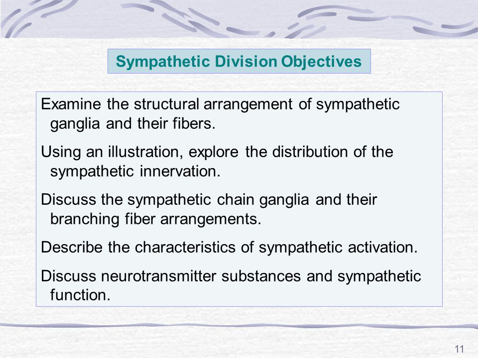 11 Sympathetic Division Objectives Examine the structural arrangement of sympathetic ganglia and their fibers.