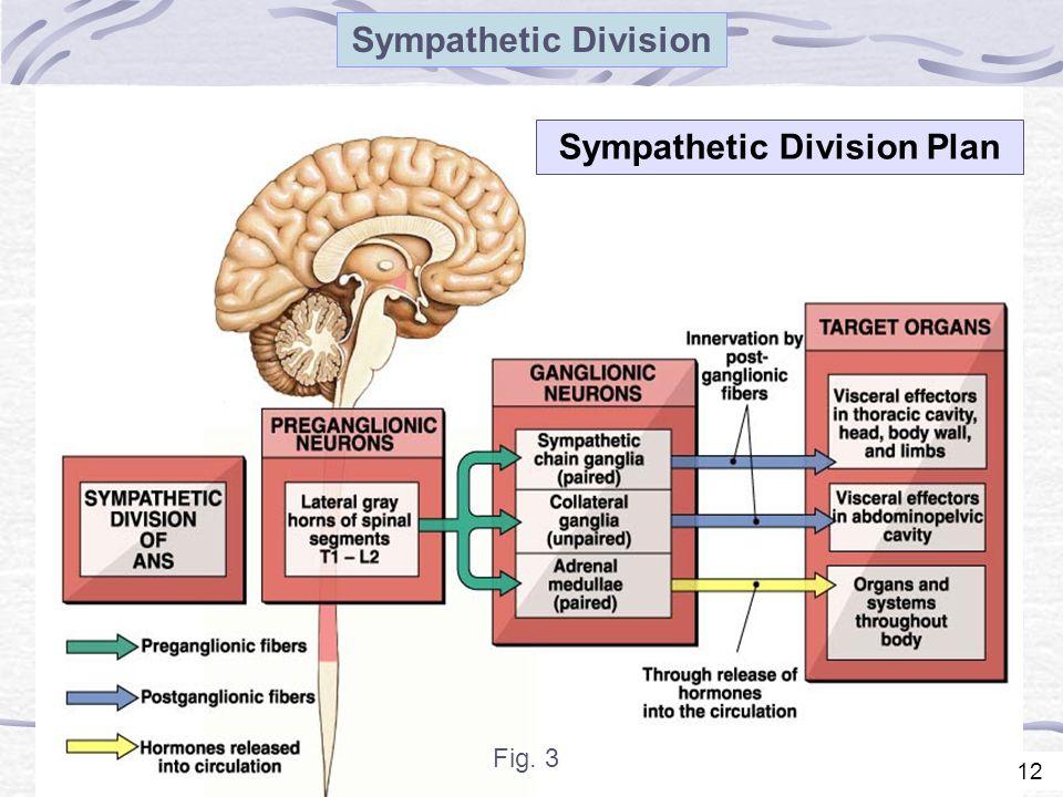 12 Sympathetic Division Sympathetic Division Plan Fig. 3 12
