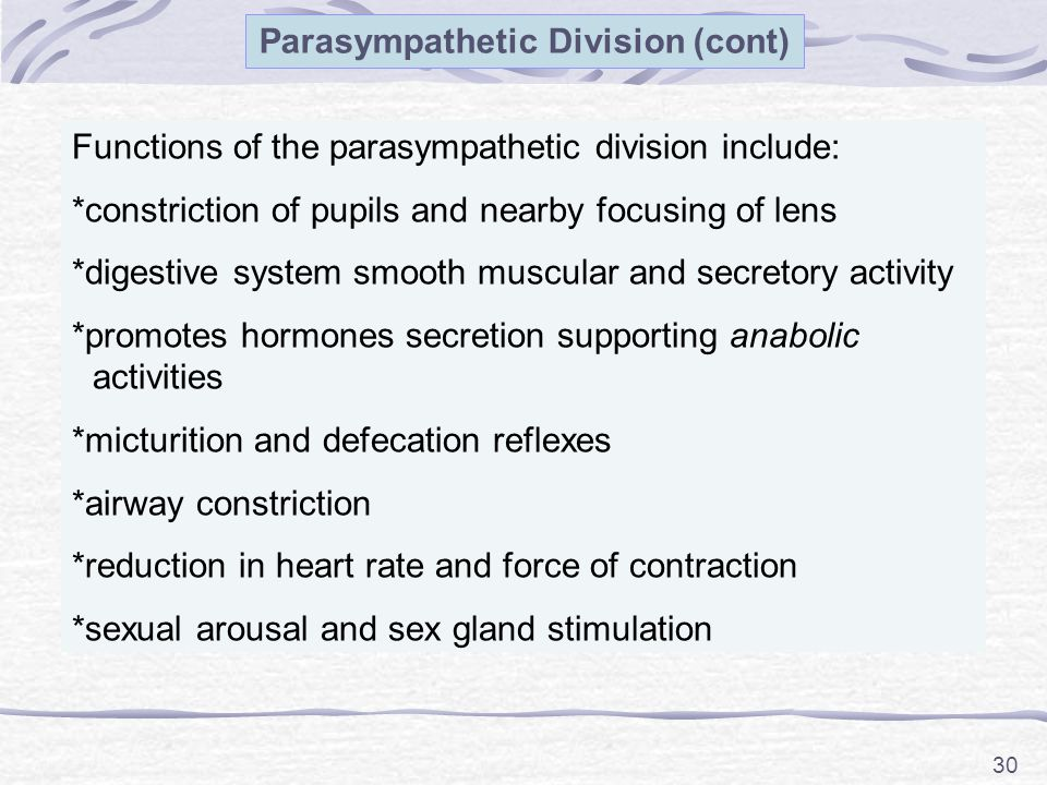 30 Parasympathetic Division (cont) Functions of the parasympathetic division include: *constriction of pupils and nearby focusing of lens *digestive system smooth muscular and secretory activity *promotes hormones secretion supporting anabolic activities *micturition and defecation reflexes *airway constriction *reduction in heart rate and force of contraction *sexual arousal and sex gland stimulation