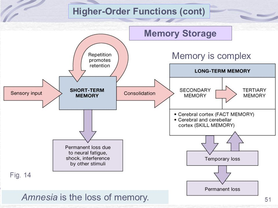 51 Higher-Order Functions (cont) Fig. 14 51 Memory Storage Memory is complex Amnesia is the loss of memory.