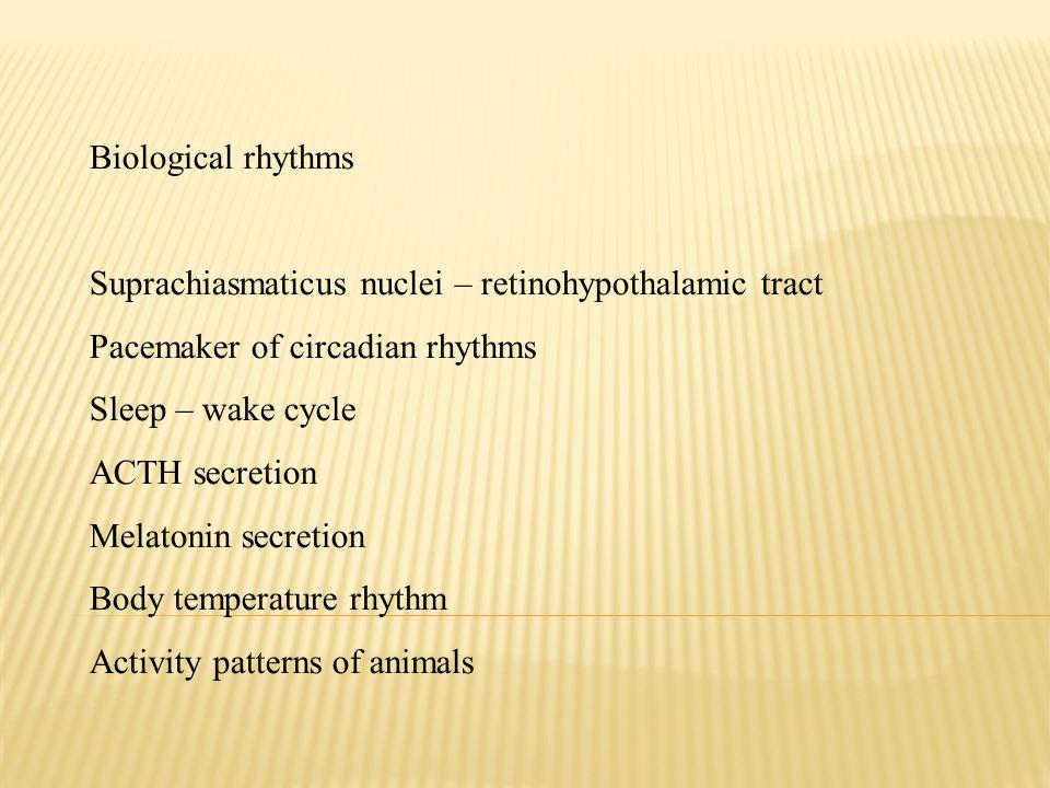 Biological rhythms Suprachiasmaticus nuclei – retinohypothalamic tract Pacemaker of circadian rhythms Sleep – wake cycle ACTH secretion Melatonin secr