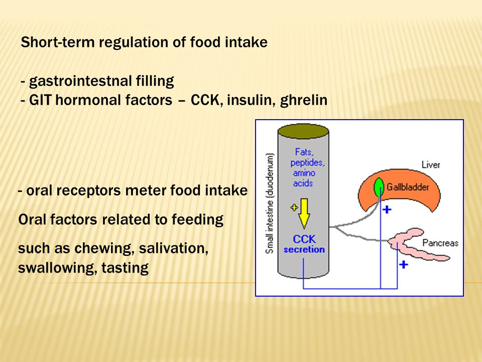 Short-term regulation of food intake - gastrointestnal filling - GIT hormonal factors – CCK, insulin, ghrelin - oral receptors meter food intake Oral factors related to feeding such as chewing, salivation, swallowing, tasting