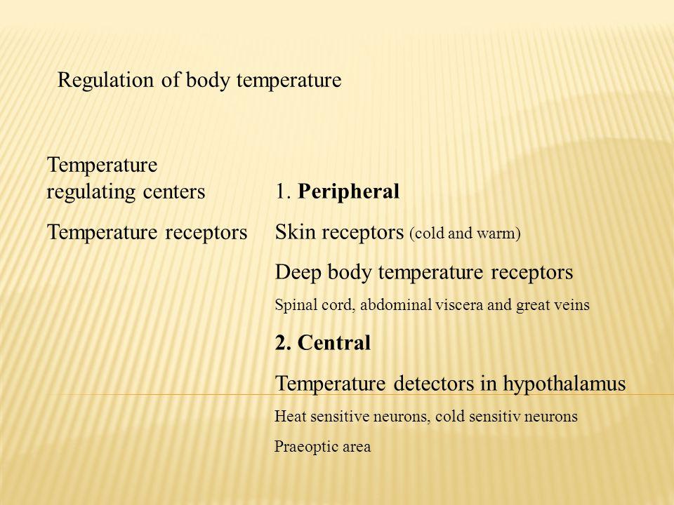Regulation of body temperature Temperature regulating centers Temperature receptors 1. Peripheral Skin receptors (cold and warm) Deep body temperature