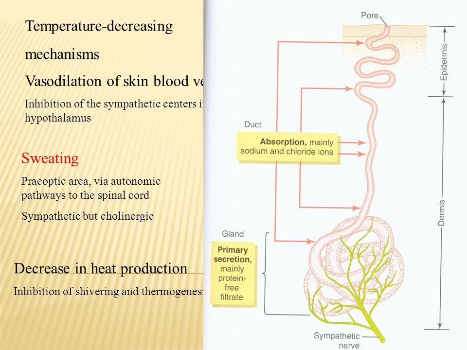Temperature-decreasing mechanisms Vasodilation of skin blood vessels Inhibition of the sympathetic centers in the posterior hypothalamus Sweating Prae